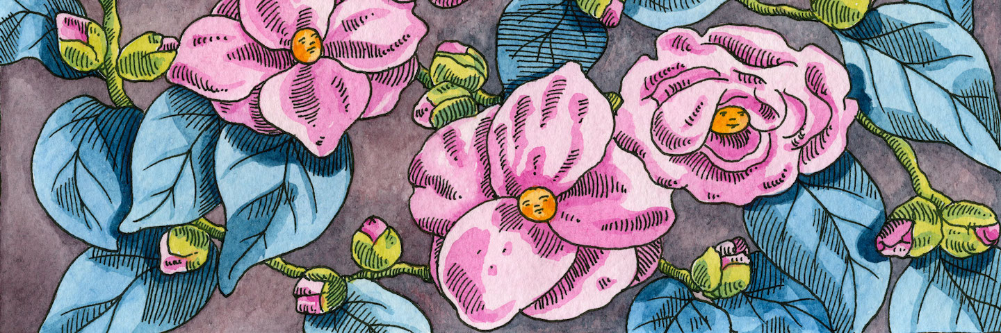 illustration of open flowers