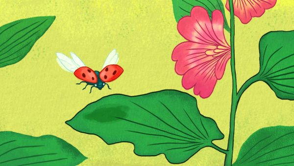illustration of ladybirds landing on a leaf