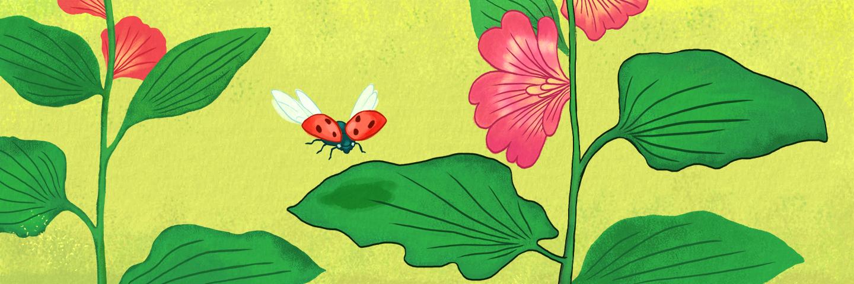 illustration of ladybirds landing on a leaf